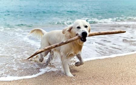 Leba  For Dogs