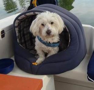 G hren lebbin hausboote eintrag urlaub auf einem hausboot mit hund auf der mecklenburger for Urlaub auf juist mit hund