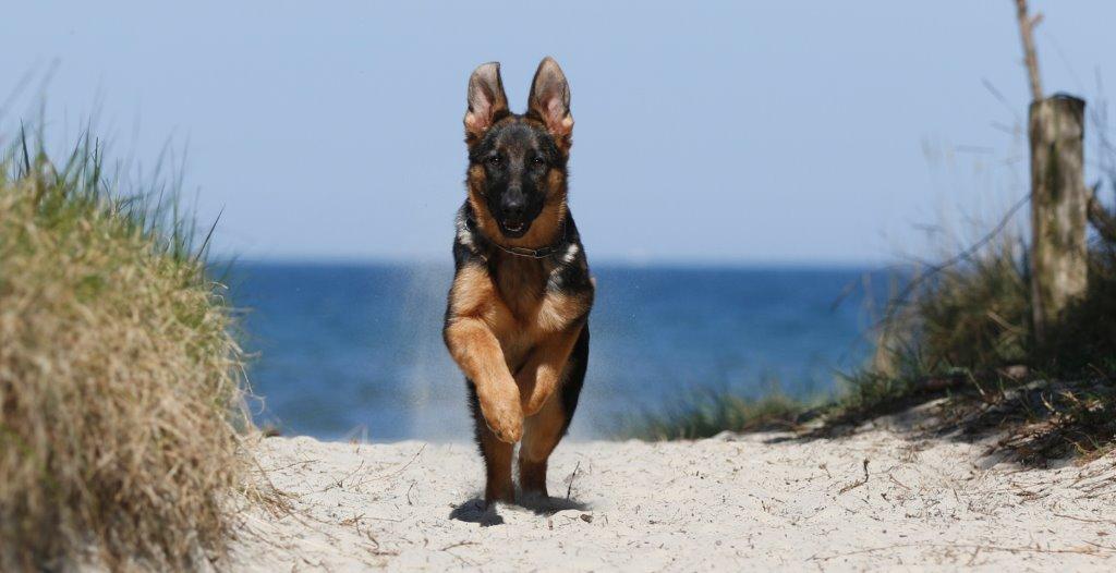 Pension landhaus teichgraf insel usedom mit hund for Pension mit hund nordsee