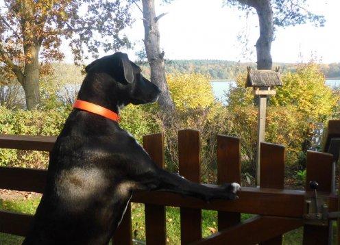 Ruhiges Ferienhaus direkt am Glammsee mit Hund
