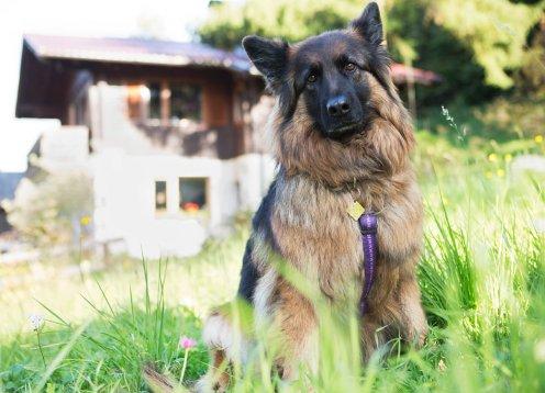 Ferienhäuser Gerhart in Haus  Ennstal mit Hund